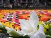 Detalle de la Alfombra de flores en la Grand Place