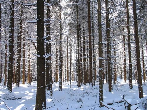 Invierno en los Altos Fagnes