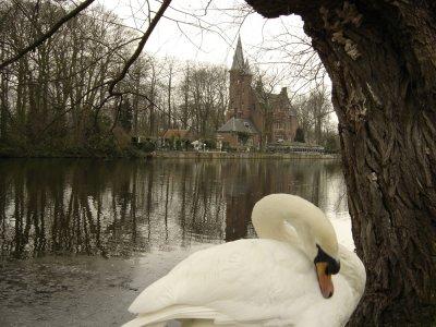 Los cisnes nadarán eternamente en Brujas