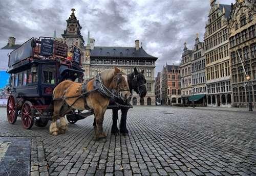 Paseos a caballo por Amberes