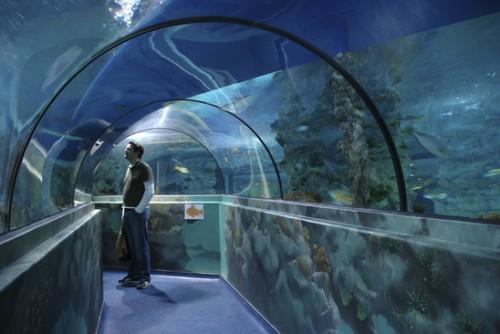 Aquatopia, el acuario de Amberes