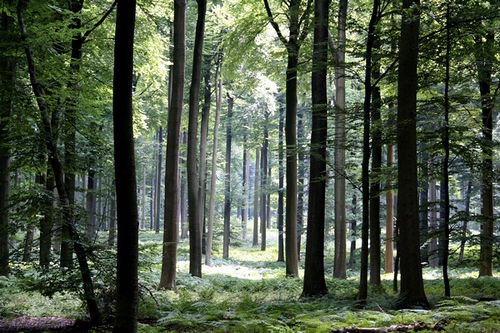 Un paseo por el Bosque de Soignes