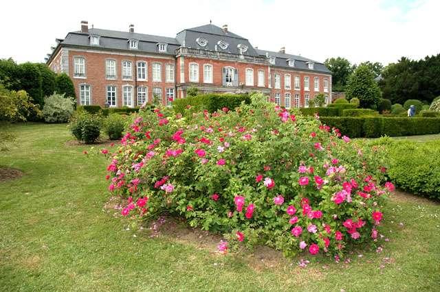 Rosas del Castillo de Hex