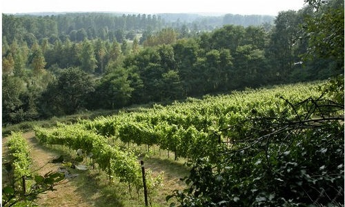 Flandes, tierra de vinos