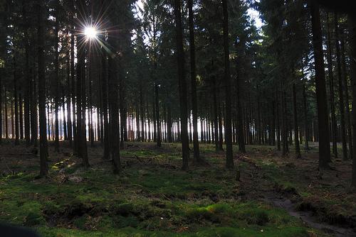 Los bosques de Hertogenwald