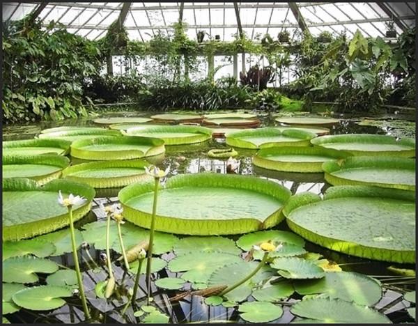 El jardín botánico nacional de bélgica es el mayor jardín