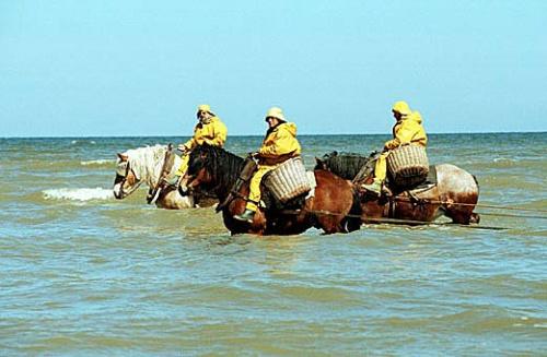 Pesca de camarones a caballo