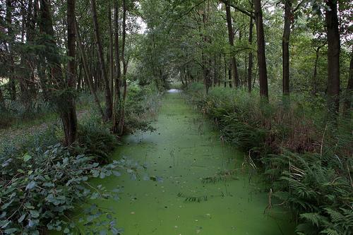Reserva Natural de Lozerheide
