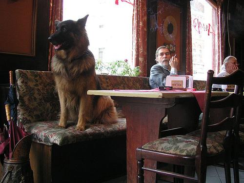 Viajar a Bélgica con animales