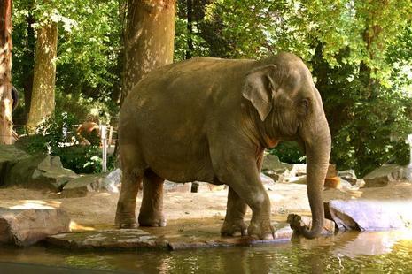 Elefantes del zoo de Amberes